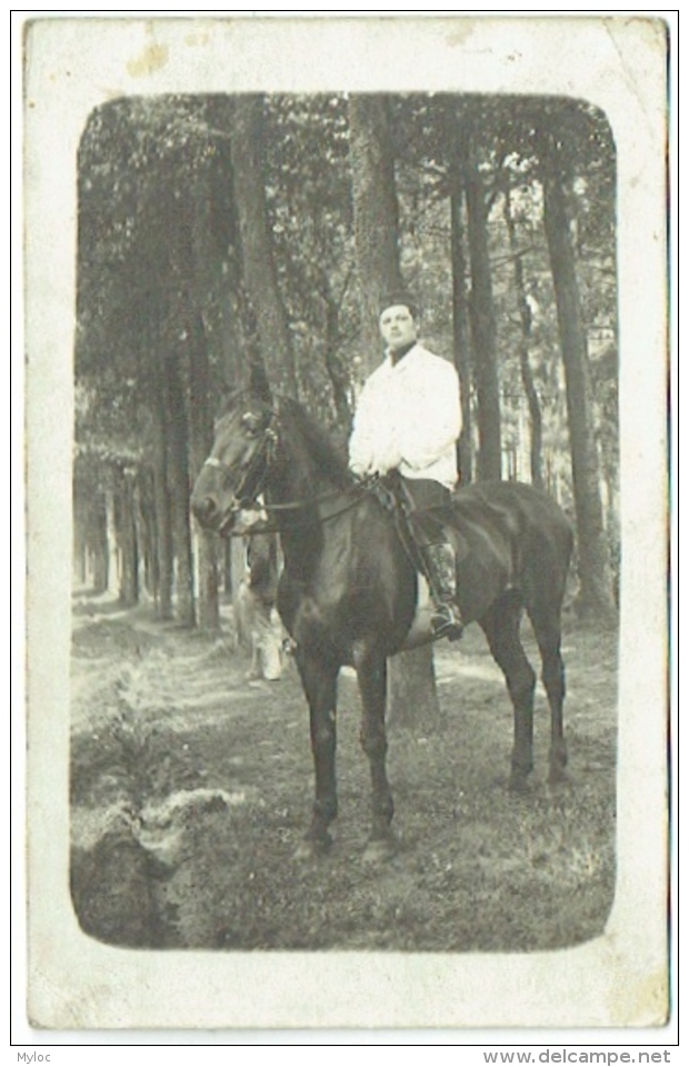 Carte Photo. Militaria. Camp Beverloo. Ecurie De L'Etat Major; 2/2 Grenadier. Cachet Léopoldsburg 1913. - Krieg, Militär
