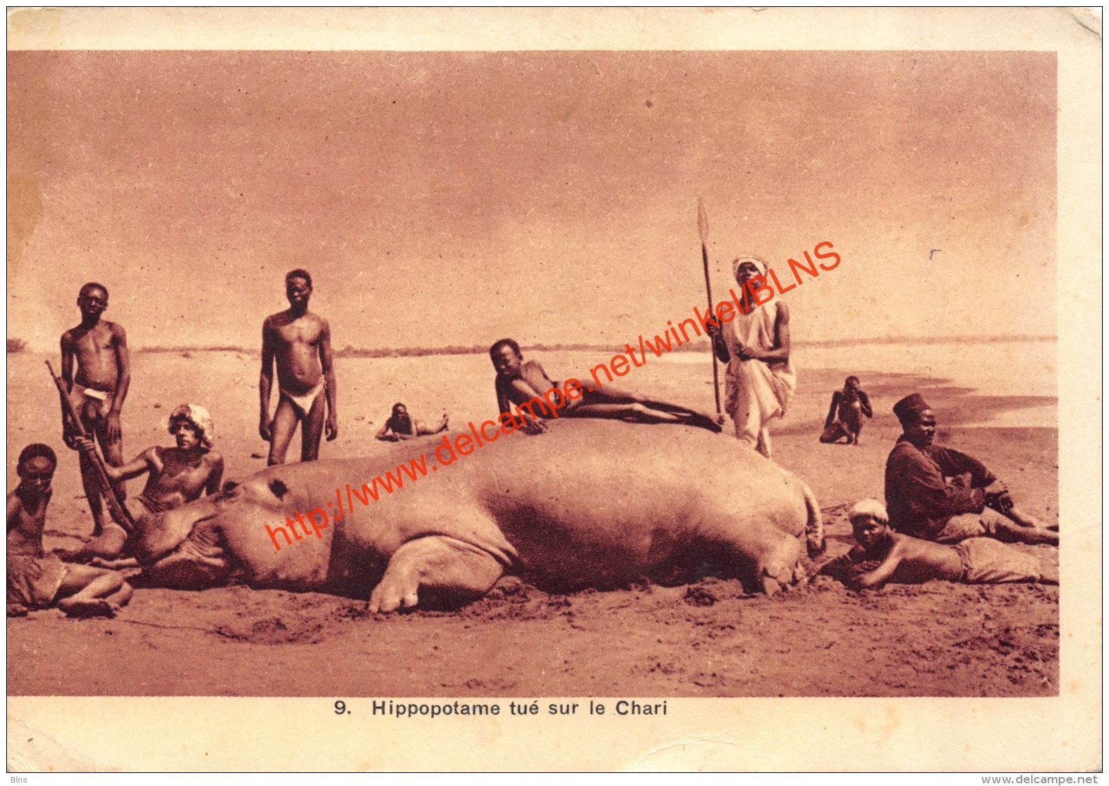 Hippopotame Tué Sur Le Chari - Centrafricaine (République)