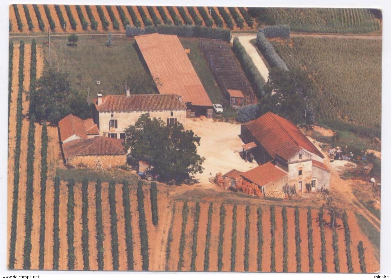 DURAVEL Près Puy L'Evêque- Domaine Du Port / Vin De Cahors Jacques Duchamp - Francia