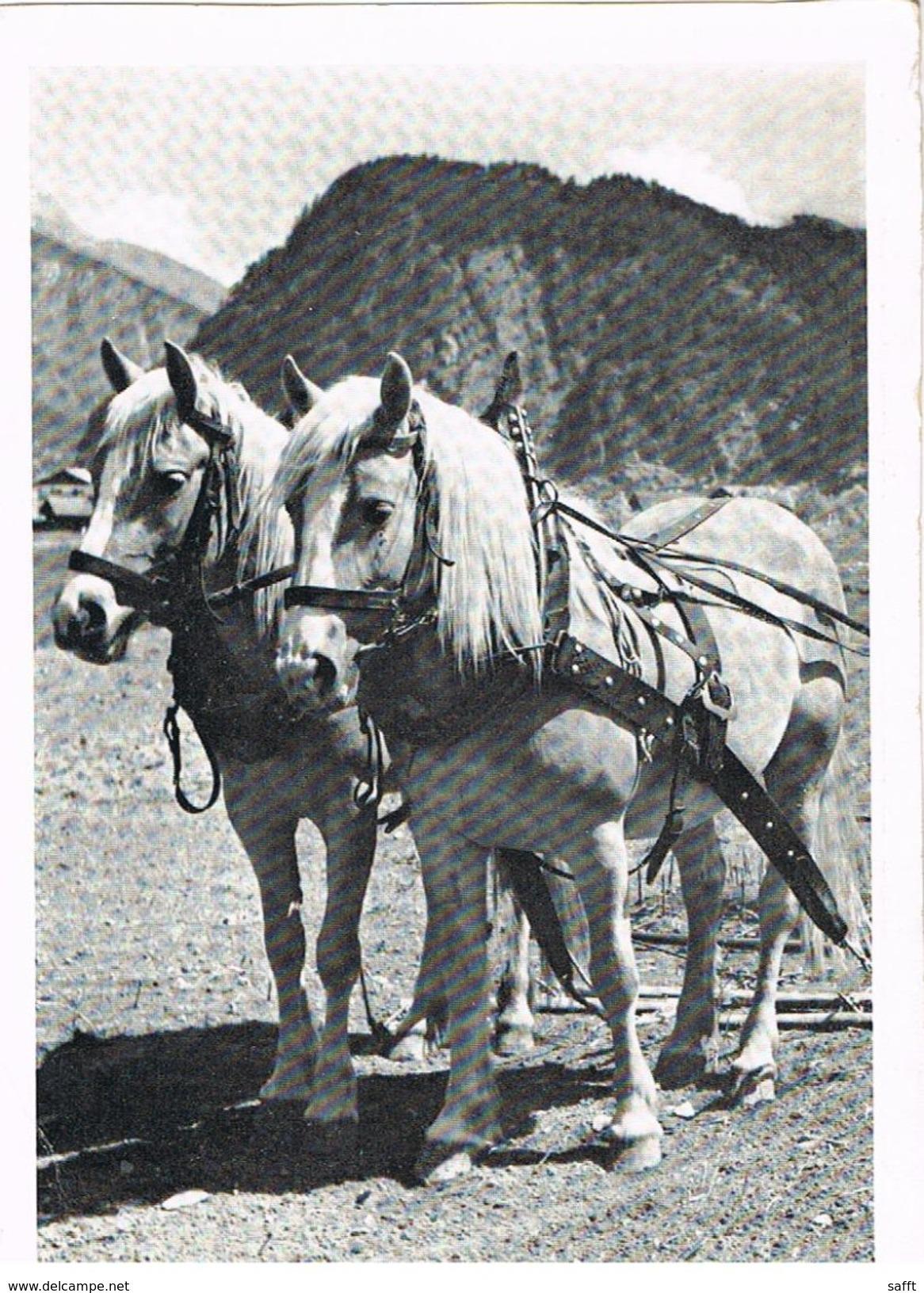 AK Arbeitspferde Aus Bildkalender Freude An Pferden - Chevaux
