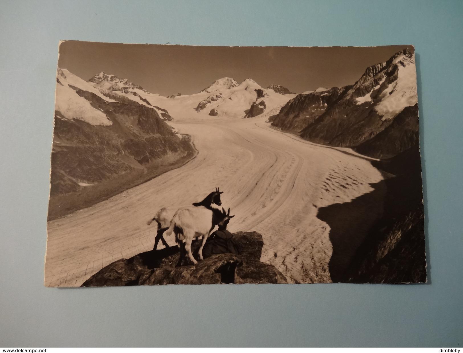 Eggishorn  - Jungfrau - Mönch - Eiger - Gr . Aletschgletscher (946) - VS Valais