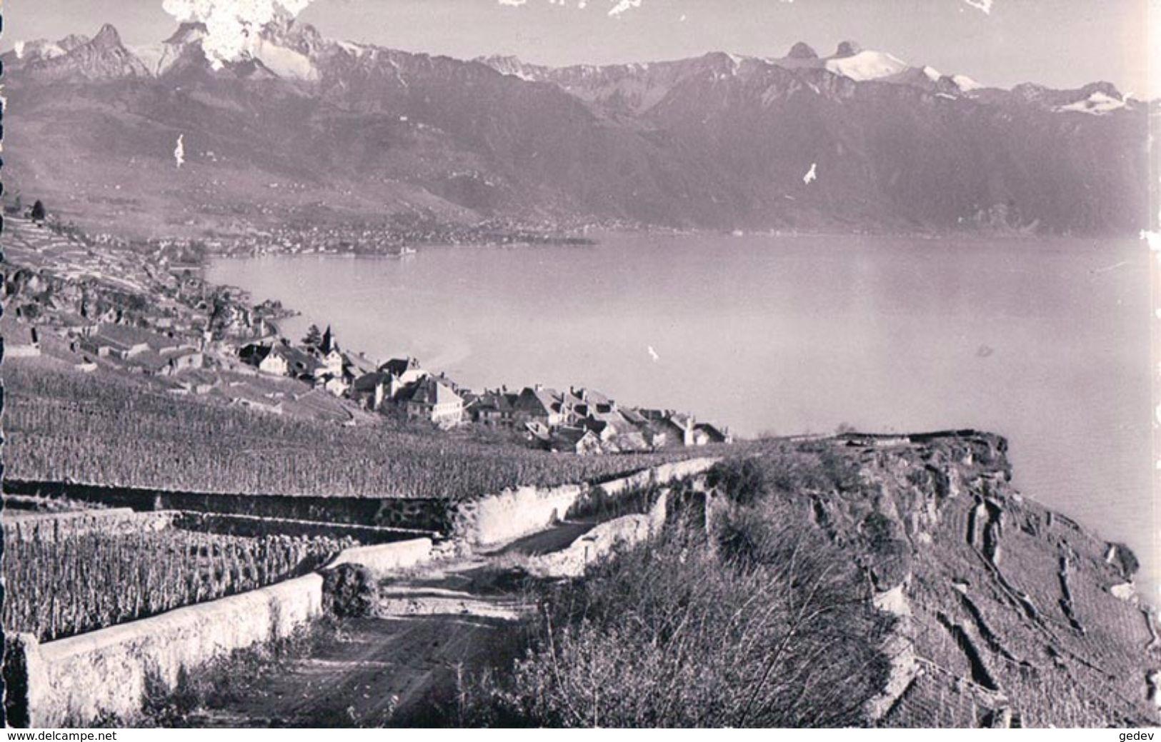 Lavaux, Rivaz (696) - VD Vaud