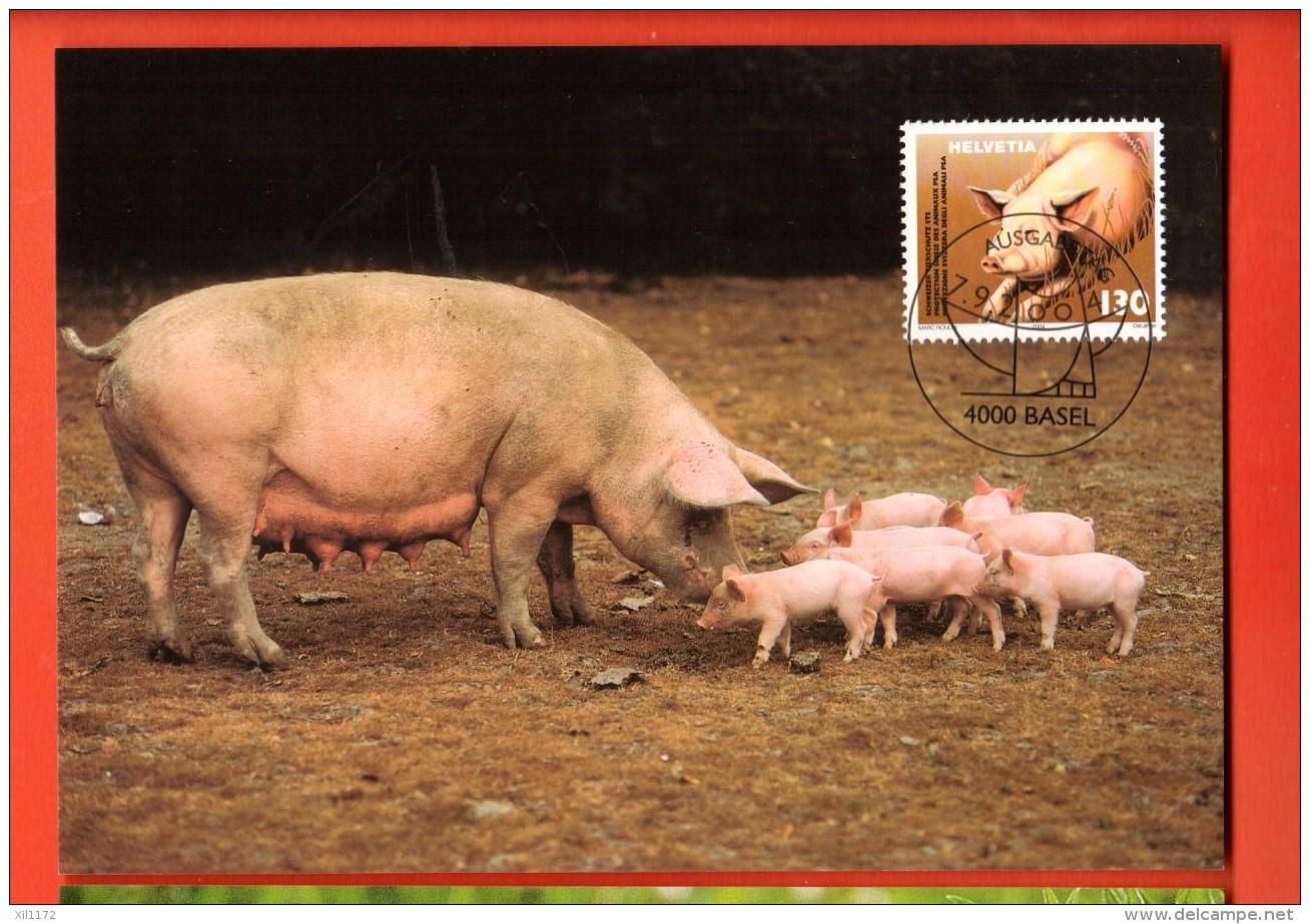 MIA-03 Cochons Pigs Schweine, Suino Maiale . Carte Maximum-Karte. - Varkens
