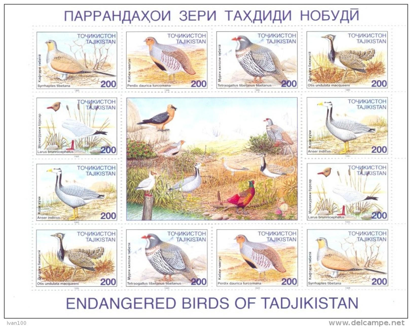 1996. Tajikistan, Birds,sheetlet, Mint/** - Tadschikistan