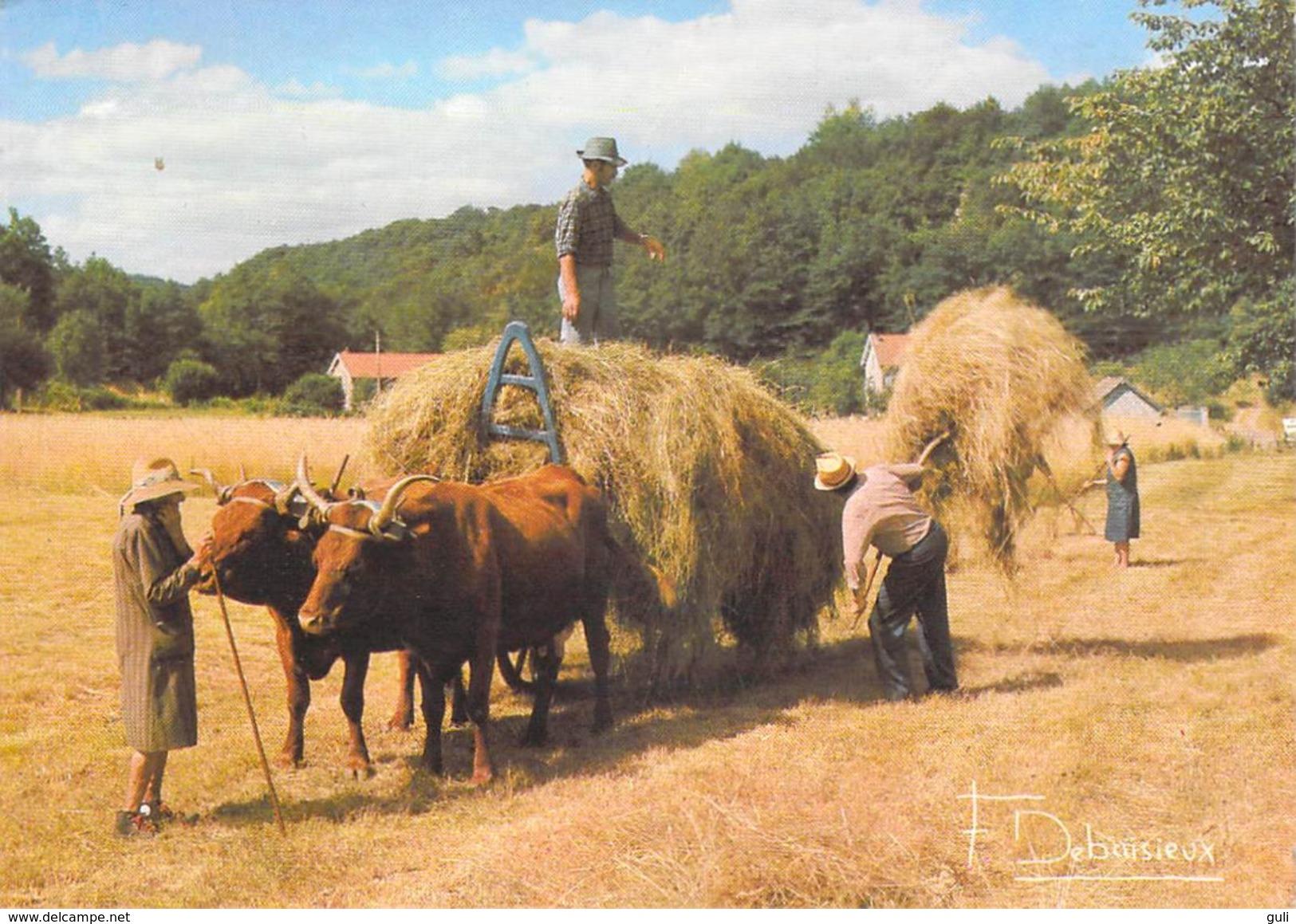 """Agriculture > Récolte Des Foins """"Voici La Dure Loi Des Champs"""" (boeufs Paysans Métier)  Photo Francis DEBAISIEUX 20 - Cultures"""