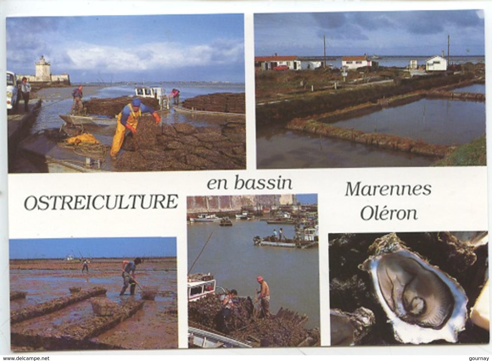 Ostréiculture En Bassin Marennes Oléron : Captage Détroquage éparage élevage Affinage En Claires (cp Vierge) - Fishing