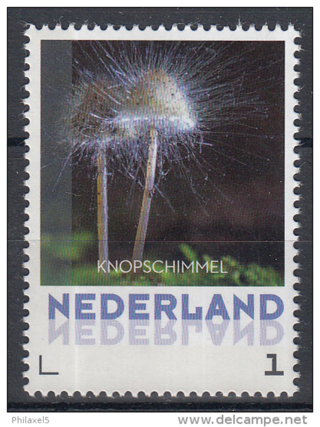 Nederland - 8 September 2015 - Paddestoelen/Pfilzen/Mushrooms - Knopschimmel - MNH - Pilze