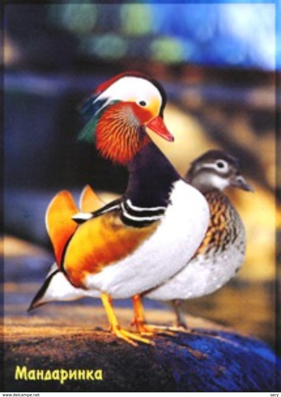 Russia 2010 Postal Stationery Card Mandarin Duck Bird Birds - Anatre
