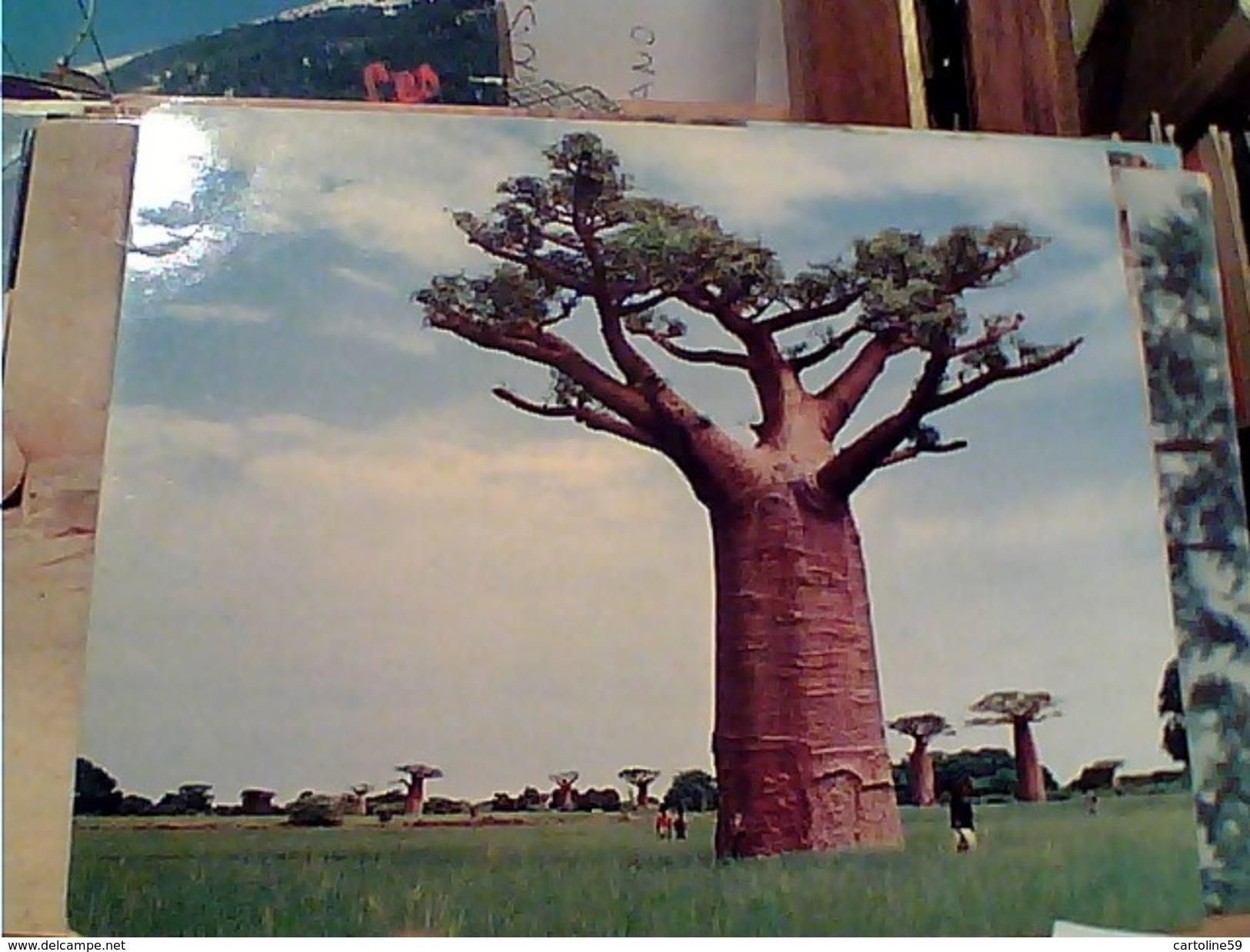 MADAGASCAR BAOBAB BAOBABS TANANDAVA TULEAR   N1975 GI17616 RIFILATA - Madagascar
