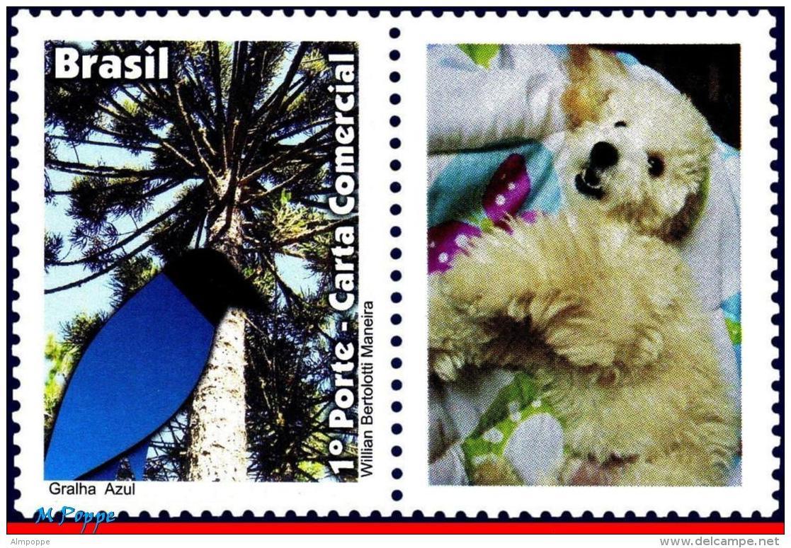Ref. BR-3204-1 BRAZIL 2011 ANIMALS, FAUNA, BLUE JACKDAW,, BIRDS, DOG, PERSONALIZED MNH 1V Sc# 3204 - Brazil