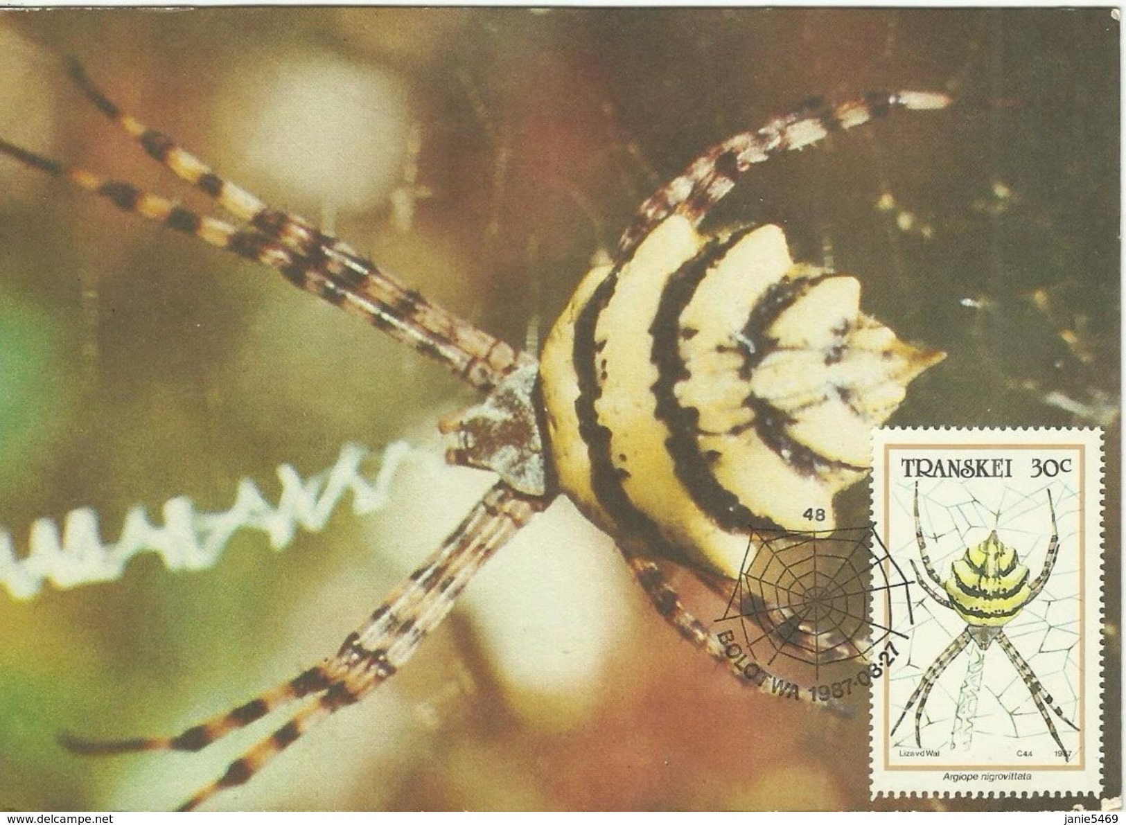 Transkei 1987 Insect 30c Spider Maximum Card - Transkei