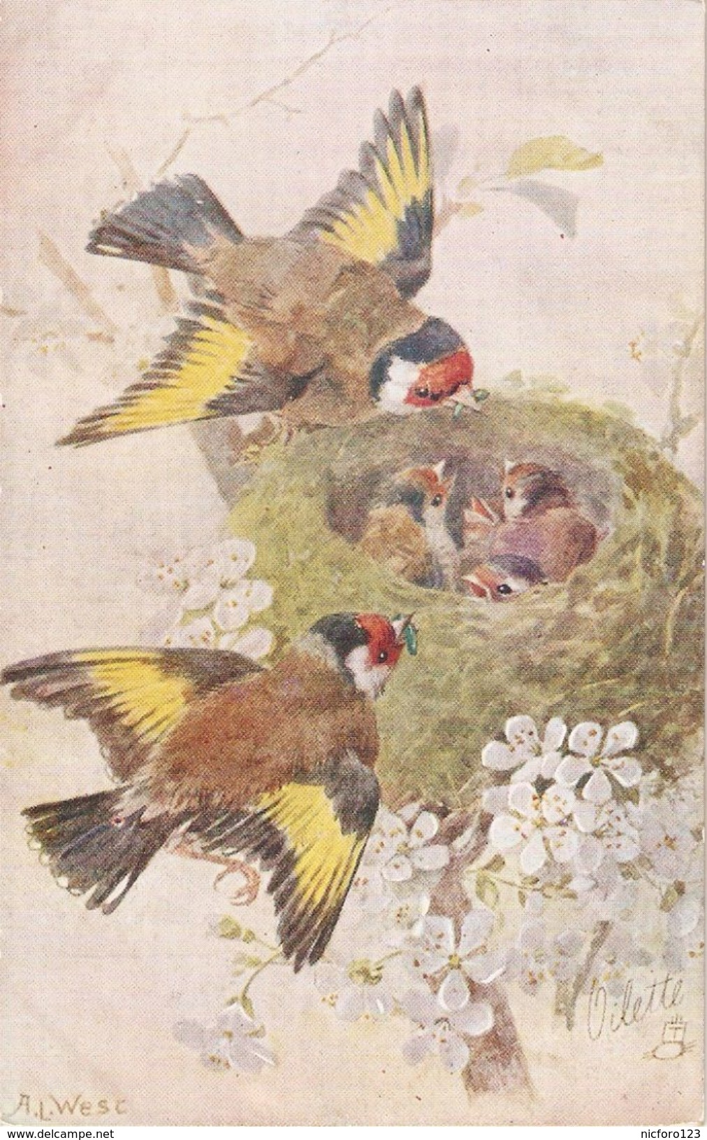 """""""A.L-West. Birds Caring For Young Birds In Nest"""" Lovely Tuck Oilette Birds And Their Nest Series  PC3430 - Tuck, Raphael"""