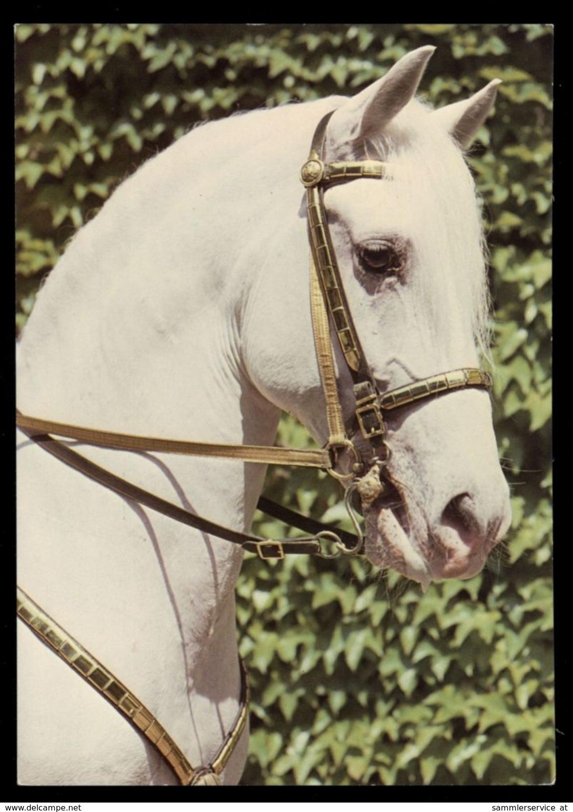 [015] Pferde-Karte 186, Lipizzaner, Spanischer Reitschule Wien, ~1980 - Pferde