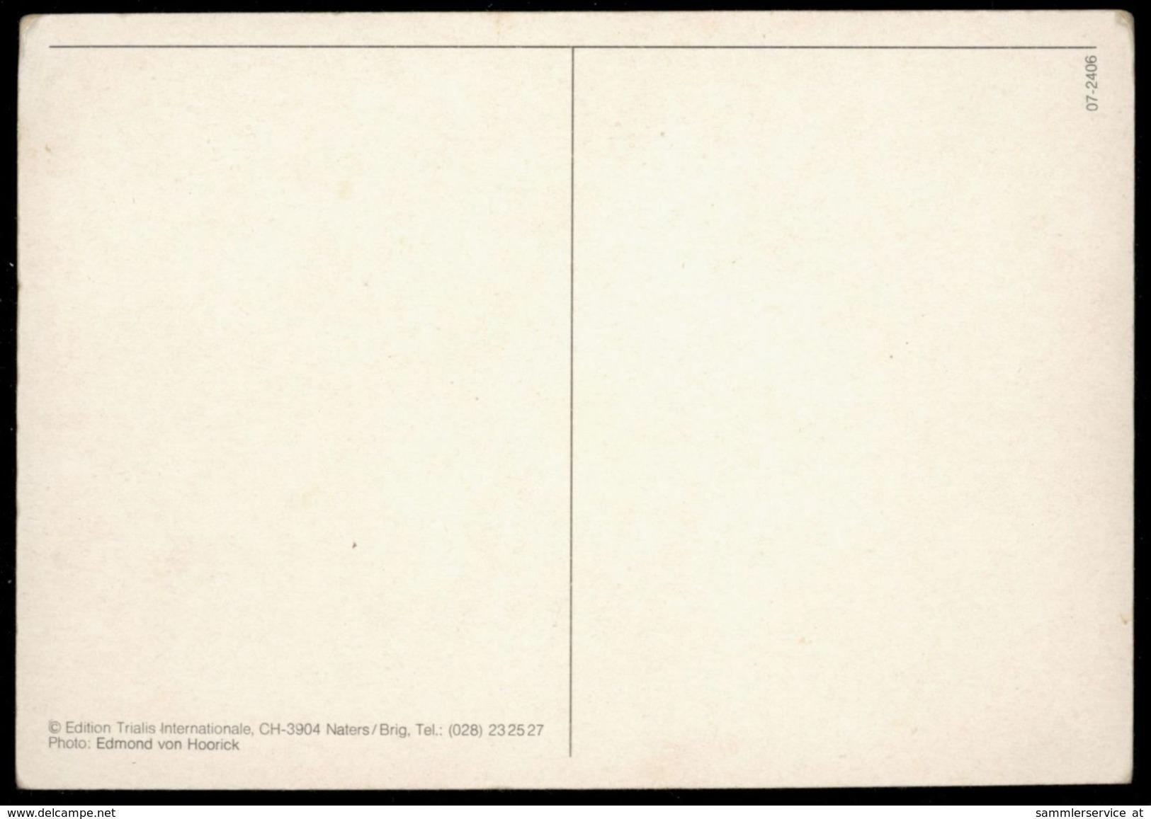 [015] Pferde-Karte 204, Pferdepaar, ~1980 - Pferde