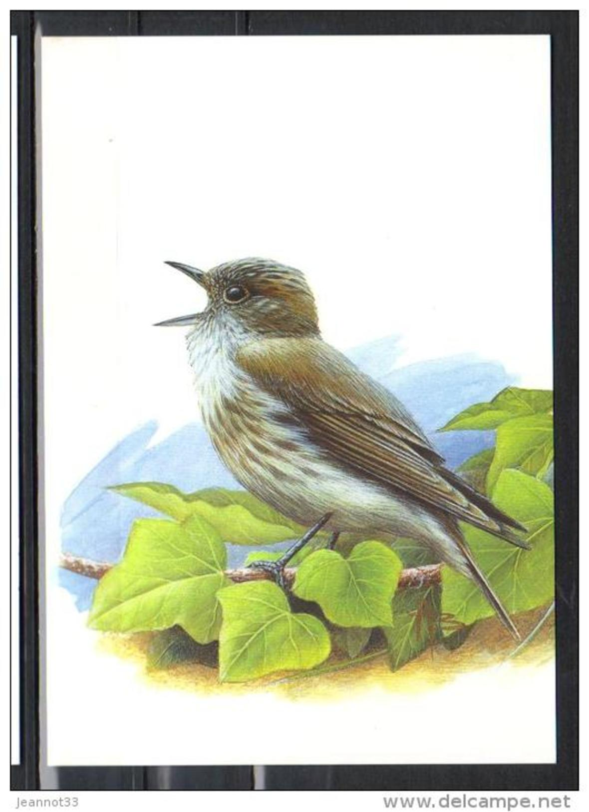 BUZIN - CARTE BLANCO - GOBEMOUCHE GRIS - 1985-.. Birds (Buzin)