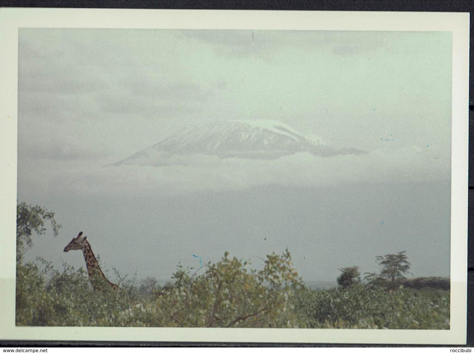 Afrika, Natur, Savanne, Giraffe Von Hobbyfotograf (20) - Afrika