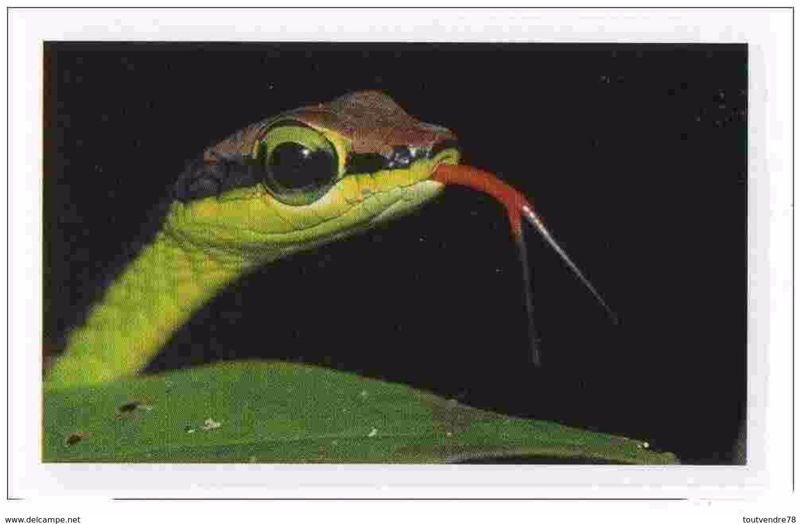 IM057 : Jungle Mania Auchan 2011 N°153 Serpent De Bronzeback - Vignettes Autocollantes