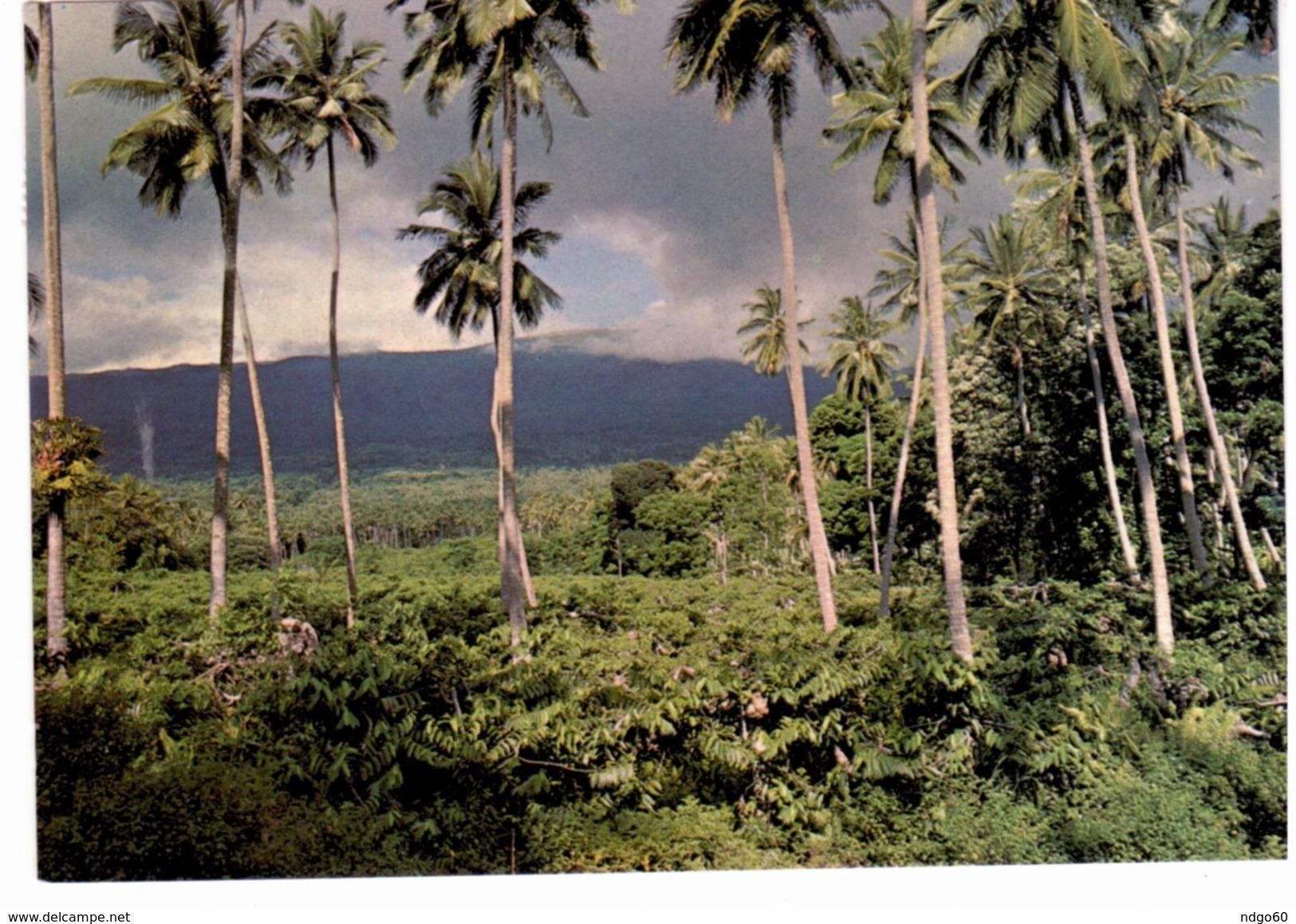 "^ Grande Comore - Ylang Ylang , Cocotiers Et "" Karthala"" - Comores"