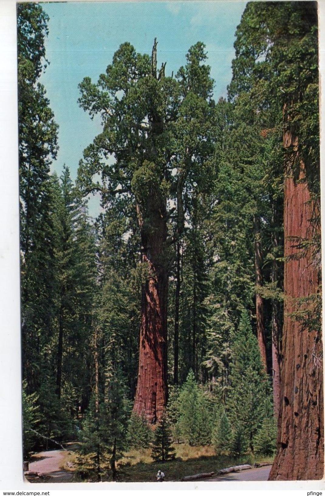 General Sherman Tree,1966 - Etats-Unis