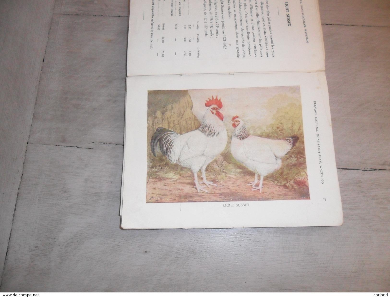 Elevage Callina ( 111 Pages )  1919 - 1923  Mont - St - Jean  Waterloo  Prop.Huylebroeck - Coq  Poule Poules - Livres, BD, Revues