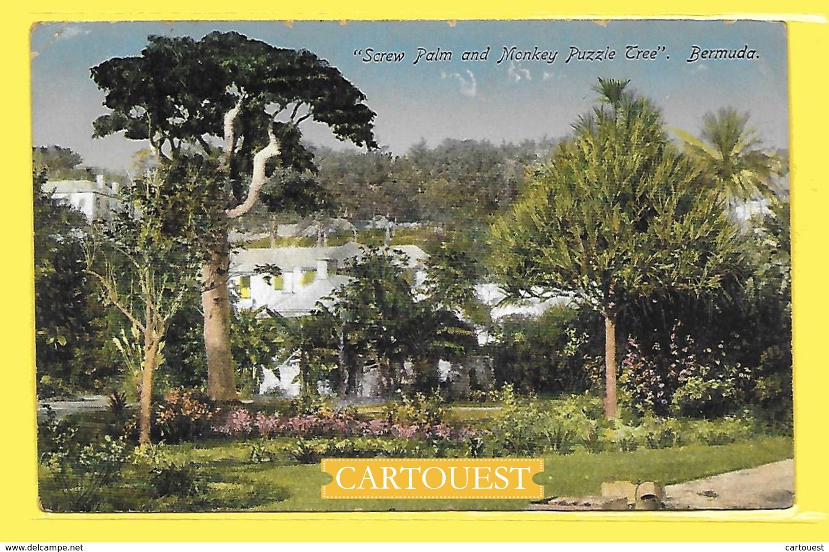 CPA Puzzle Tree Screw Palm & Tablet , ST GEORGES Bermuda - Bermudes