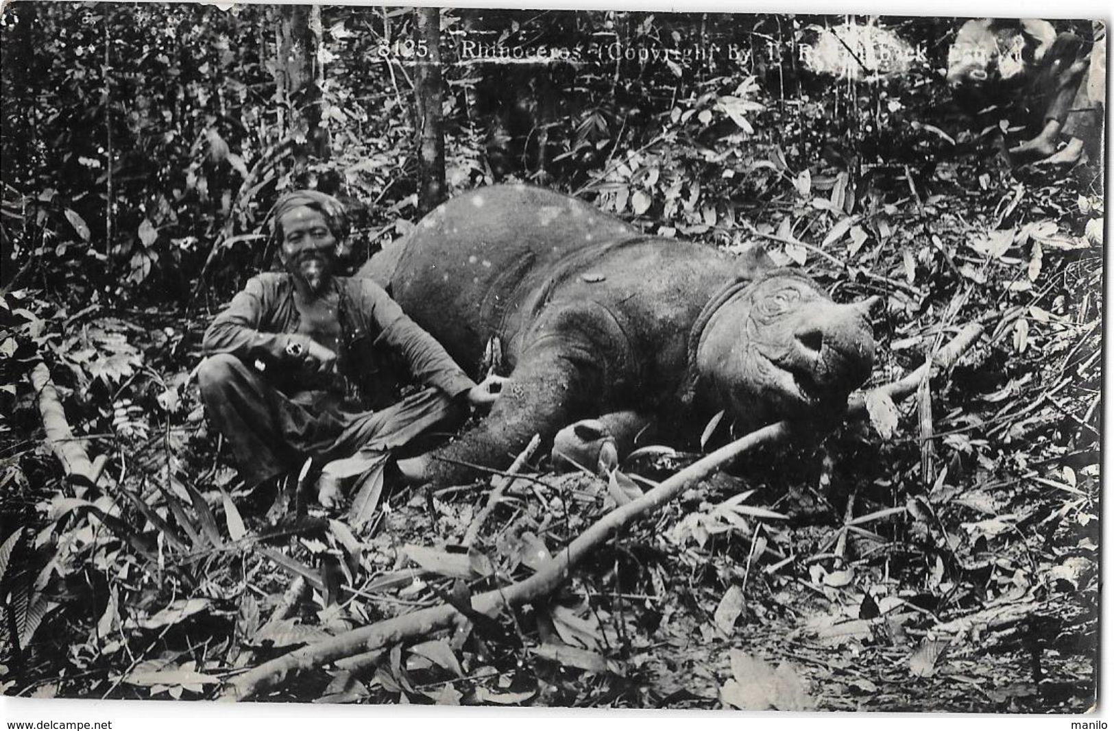 ASIE - CHASSE AU RHINOCEROS -  Carte Photo  - Animal Mort  - Carte Marquée Gevaert - Postcards