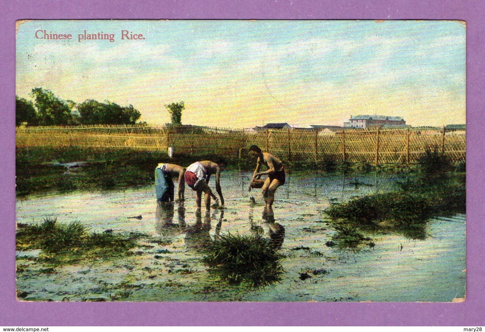 Asie Chine Chinese Planting Rice - A Prendre En L Etat - Chine