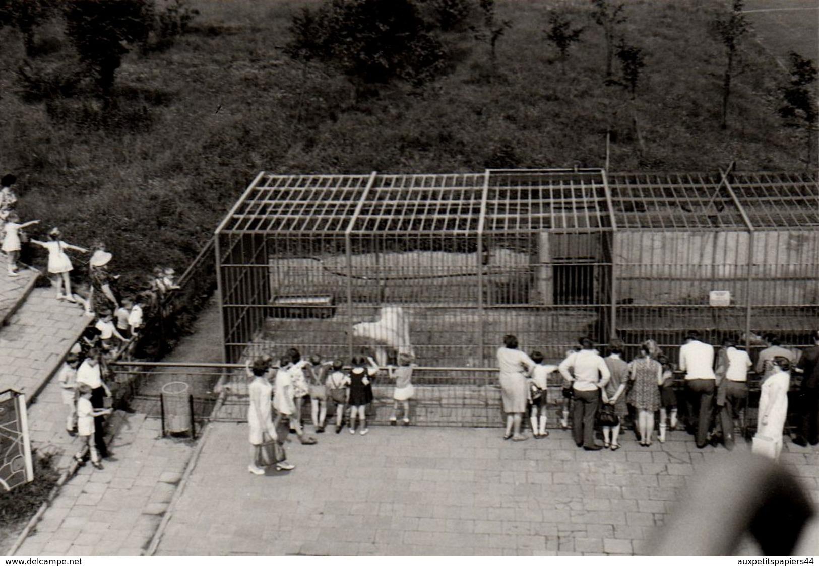 Photo Originale Zoo - L'enclos Des Ours Polaires, Ours Blancs, Eisbär & Visiteurs - Animaux Polaires En 1969 - Anonyme Personen