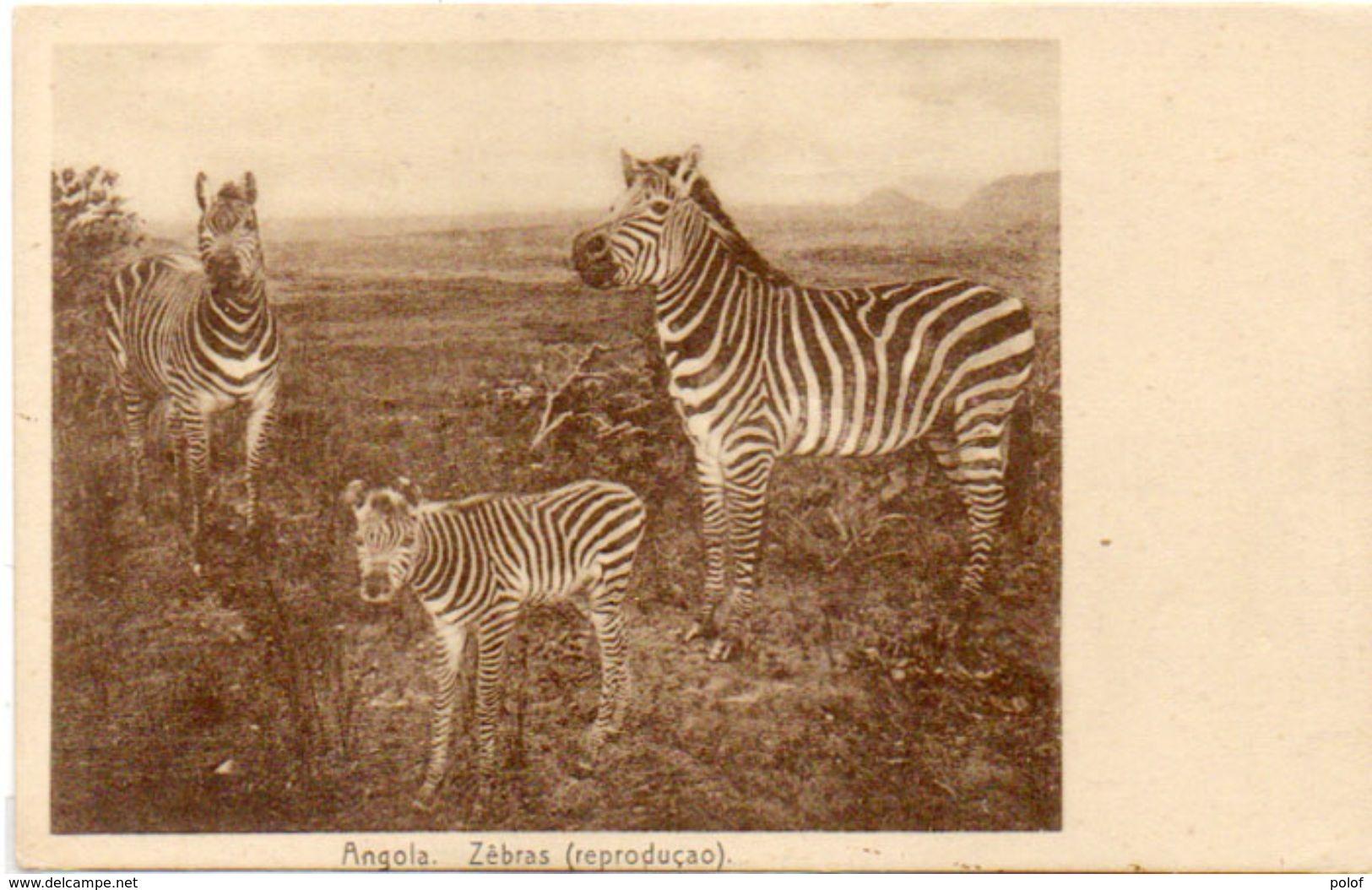 Zébras (Reproduçao)   (101304) - Angola