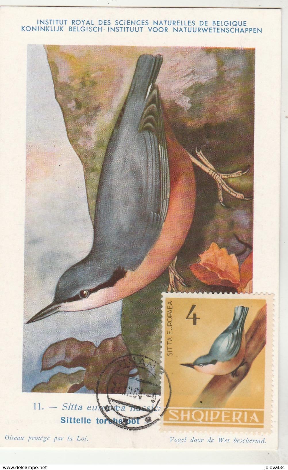 Albanie Carte Maximum 1964  Yvert  703 - Sittelle D' Europe - Thème Animaux Oiseaux - Albanie