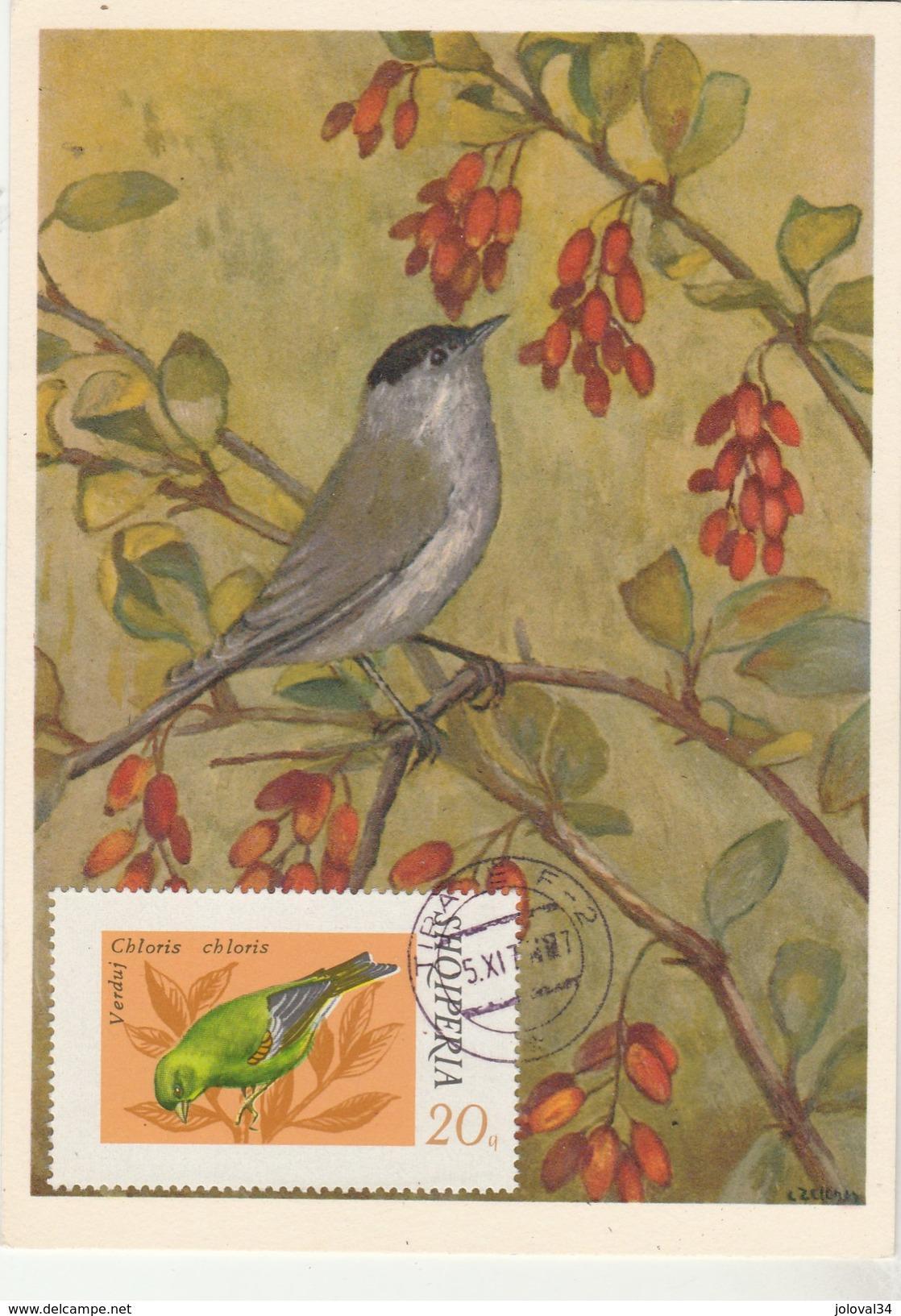Albanie Carte Maximum 1975  Yvert  1524 - Verdier - Thème Animaux Oiseaux Chanteurs - Albanie