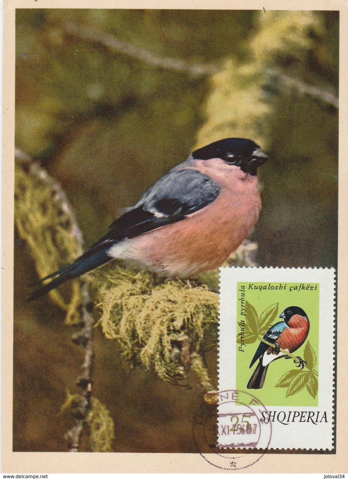 Albanie Carte Maximum 1975  Yvert  1525 - Rouge Gorge  - Thème Animaux Oiseaux Chanteurs - Albanie