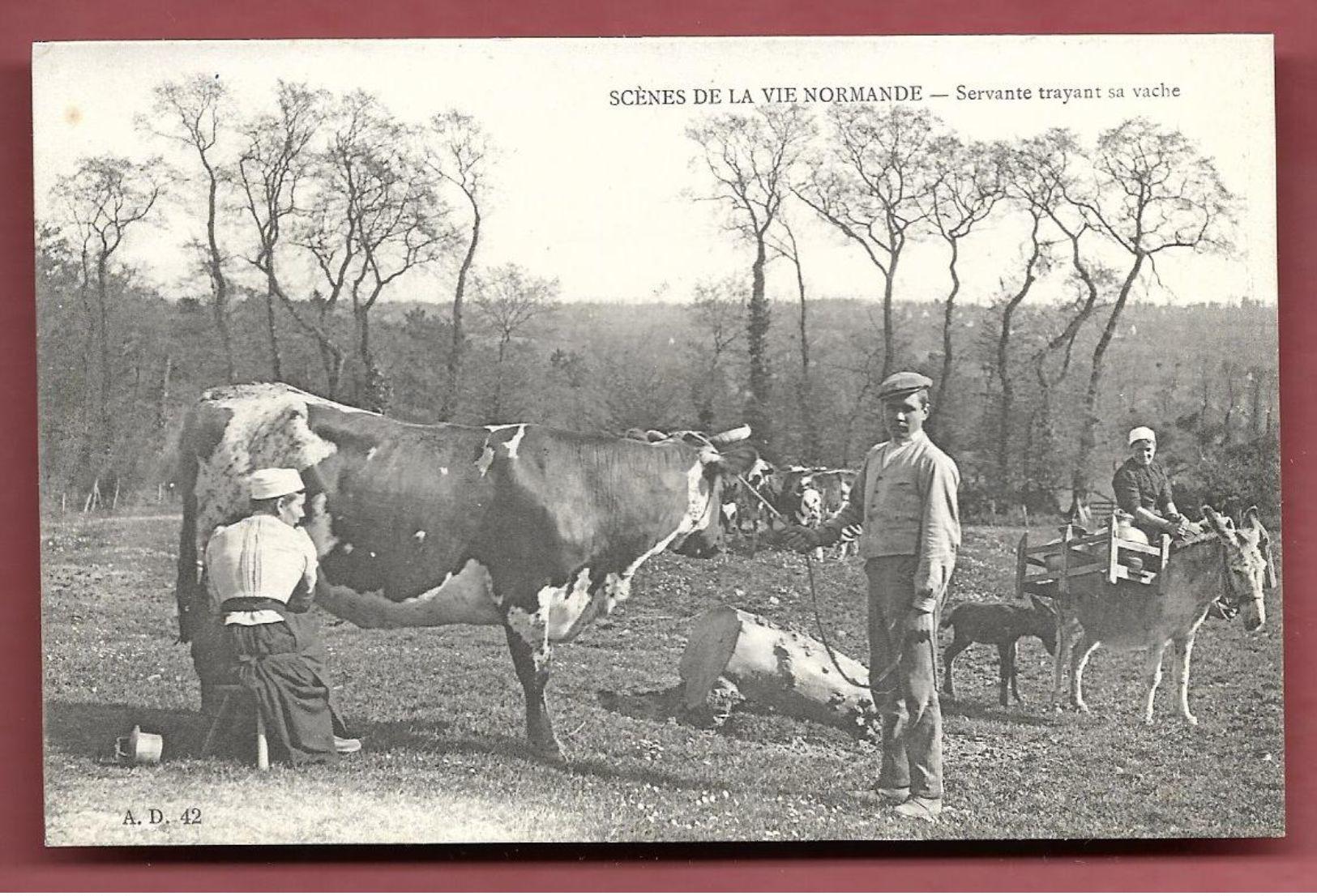 Scène De La Vie Normande - Servante Trayant Sa Vache - Francia