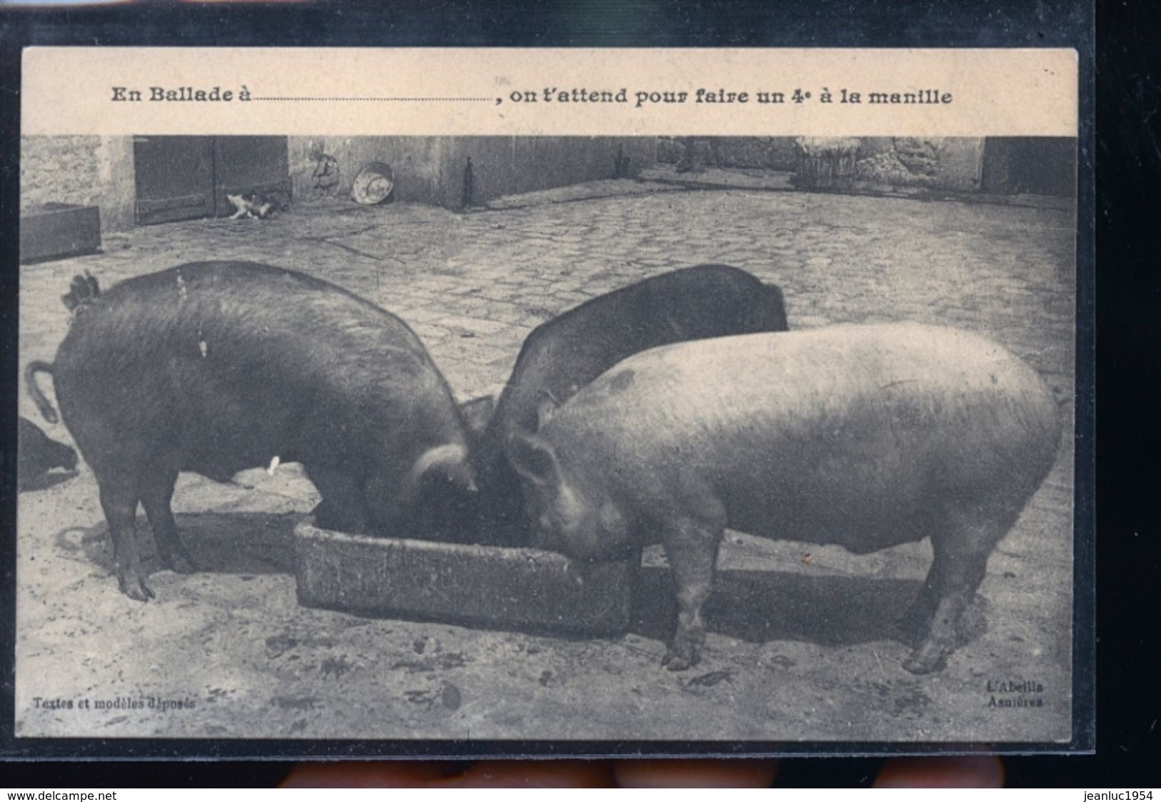 COCHONS - Cochons