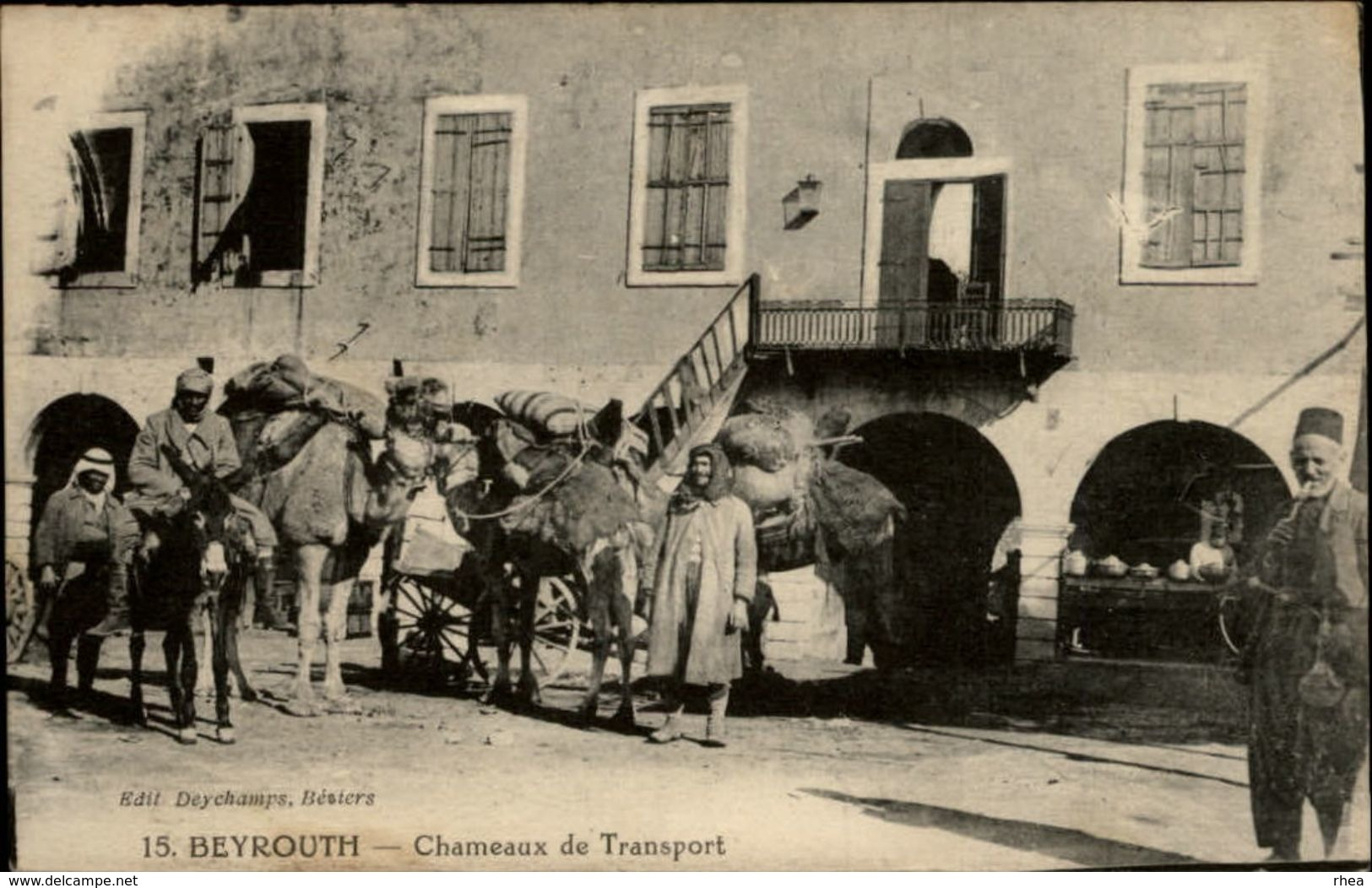 LIBAN - BEYROUTH - Chameaux De Transport - Liban
