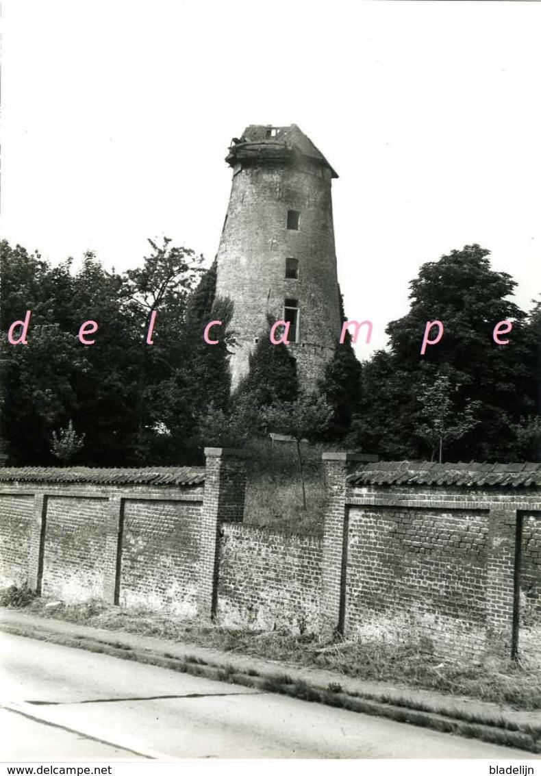 ASSE (Vlaams-Brabant) - Molen/moulin - Echte Foto Van De Molenromp Van Morette In 1967 Met Deel Van De Kap - Lieux