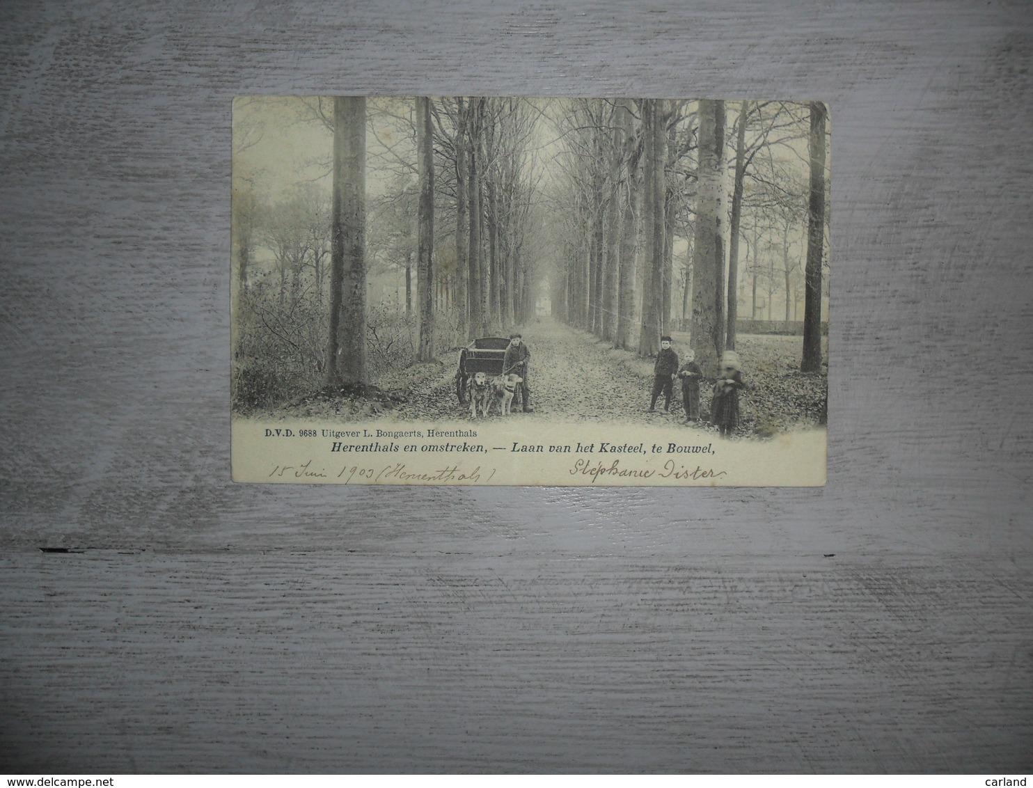 Bouwel  :  Laan Van Het Kasteel  -  D.V.D. 9688  -  Attelage De Chiens - Hondenspan - Grobbendonk