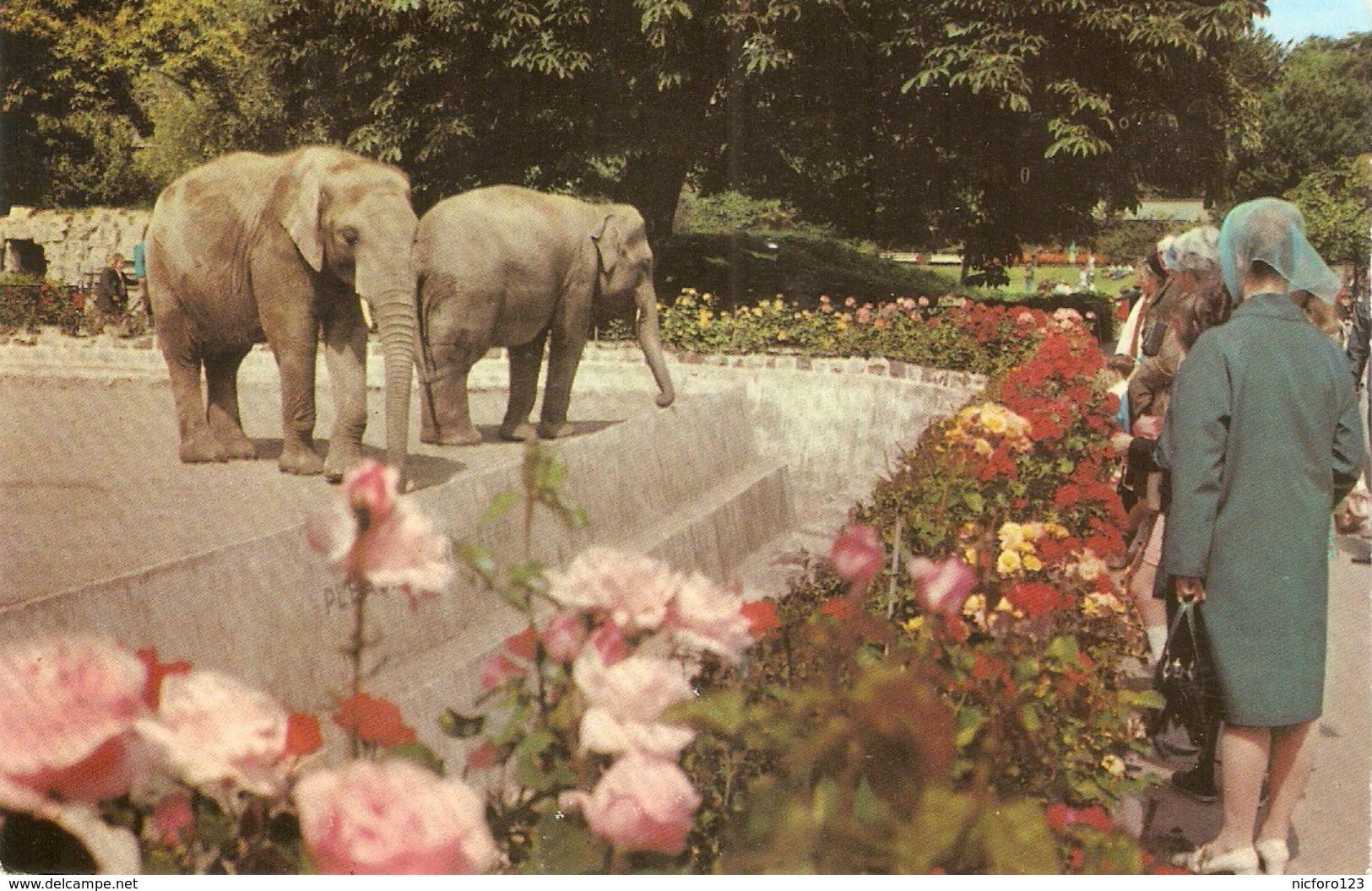 """Elephants At Bristol Zoo"" Nice English Postcard 1950/60s - Elefantes"