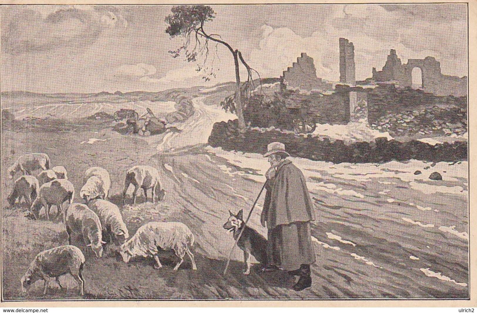 AK Neues Leben In Ostpreußen - N. Zeichnugn Willy Nitzsche - Schäfer Schafe - Reclams Universum - Feldpost 1916 (33065) - Ostpreussen