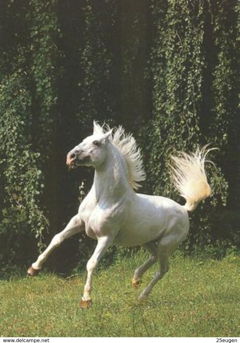 HORSES / PFERDE / CHEVAUX /    POSTCARD  UNUSED     ( H  4835 ) - Horses