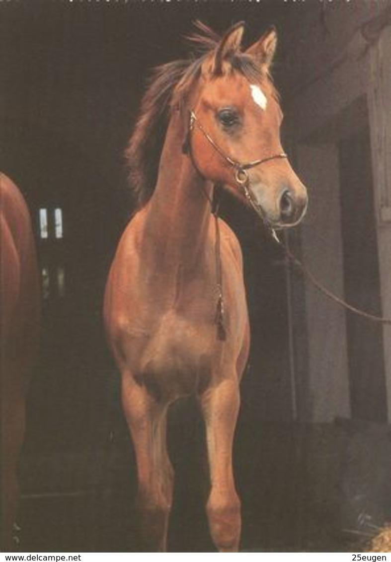 HORSES / PFERDE / CHEVAUX /    POSTCARD  UNUSED     ( H  4968 ) - Pferde