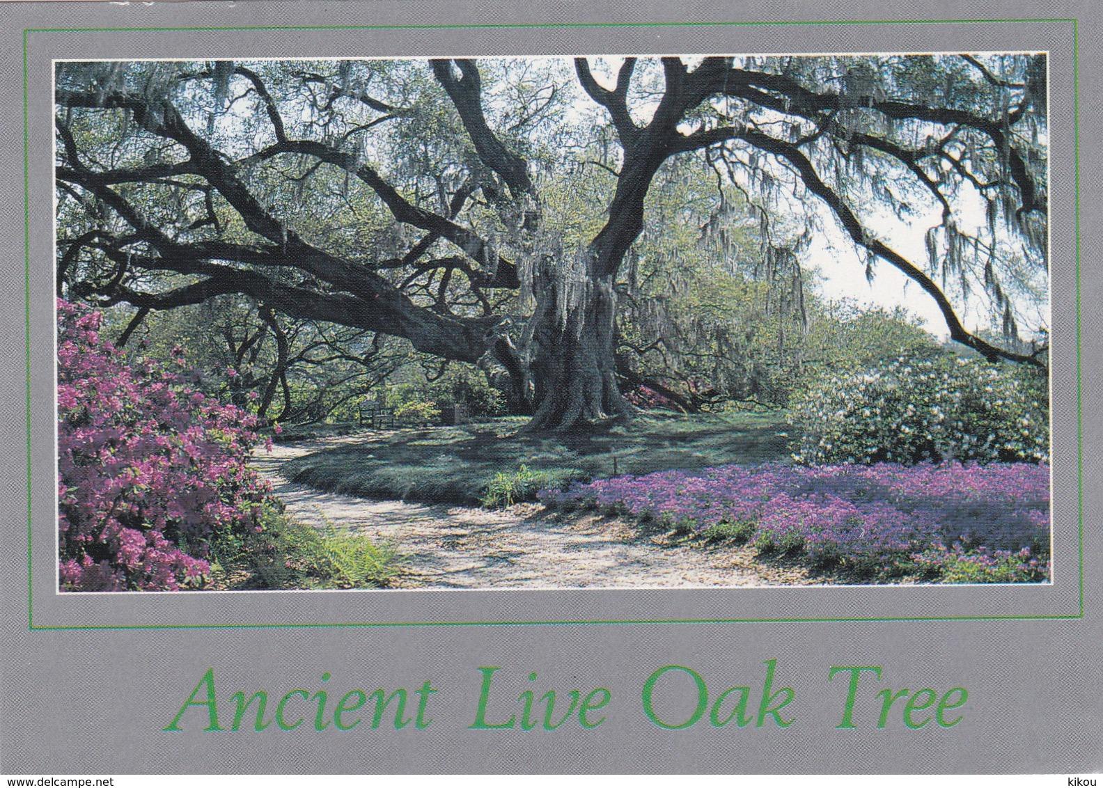 La  LOUISIANE - Ancien Chêne Vivant (Ancient Live Oak Tree) - - Non Classés