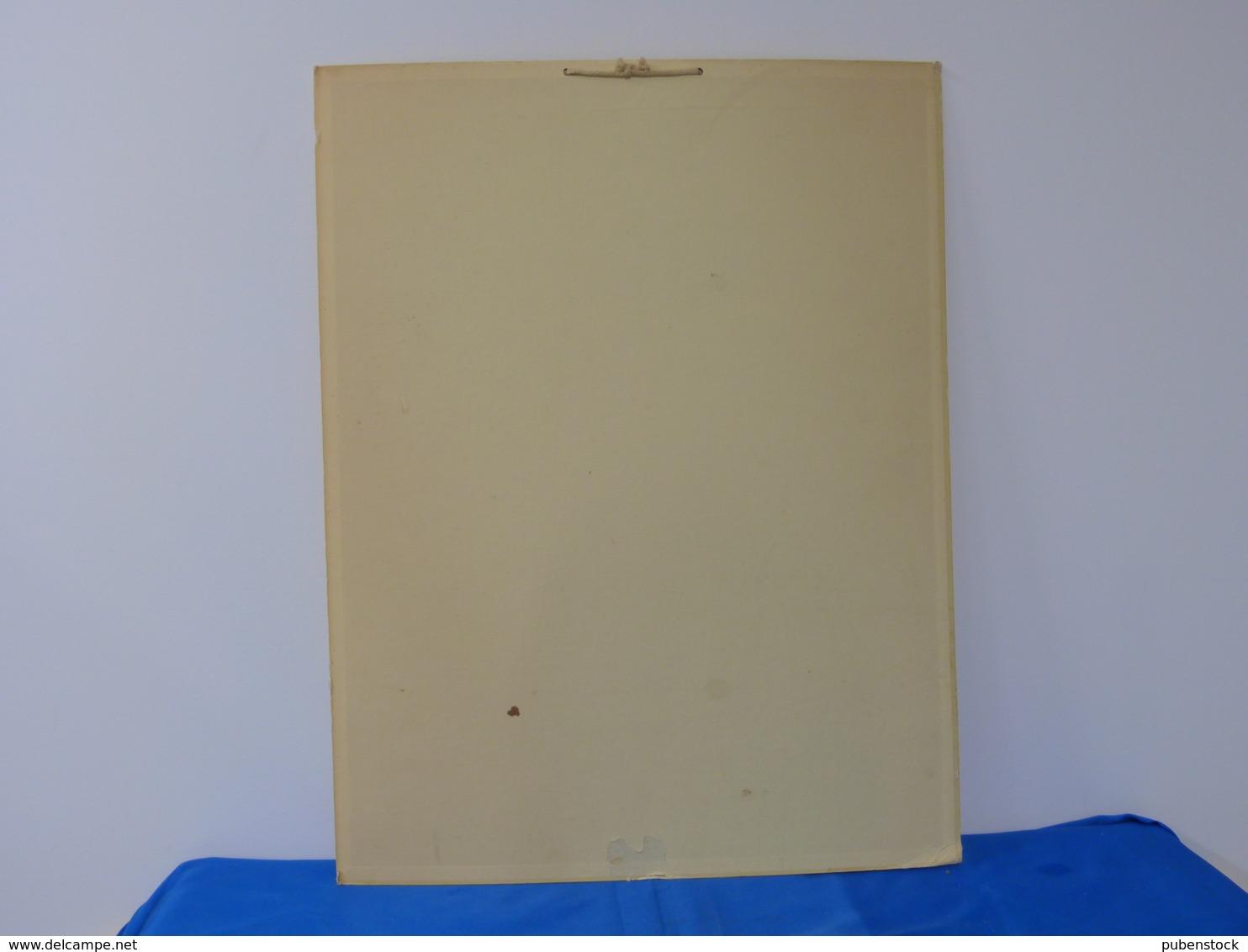 """Planche Pédagogique Cartonnée """"LE LAIT"""". - Plaques En Carton"""