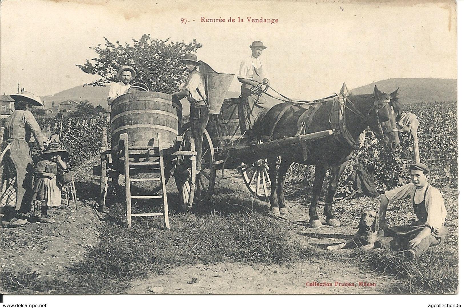 RENTREE DE VENDANGE - France