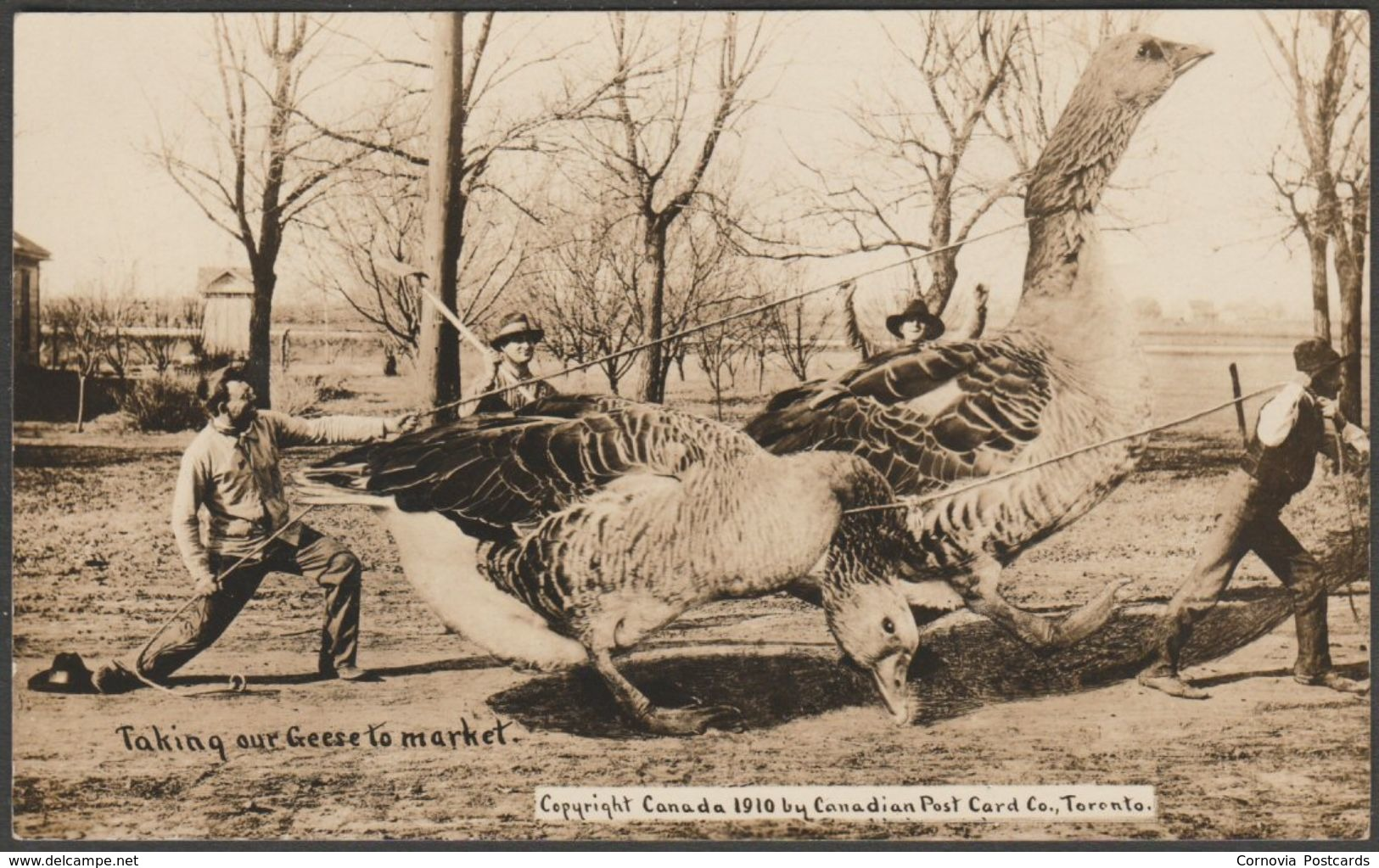 Exaggeration, Taking Our Geese To Market, Canada, 1910 - Canadian Post Card Co RPPC - Unclassified