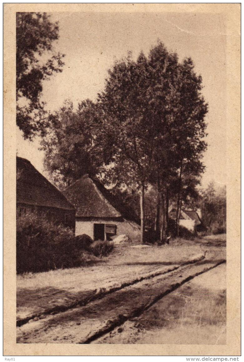 BELGIQUE - ANVERS - ANTWERPEN - Kasterlee - Un Chemin Dans La Campine Anversoise. Casterlé. - Kasterlee