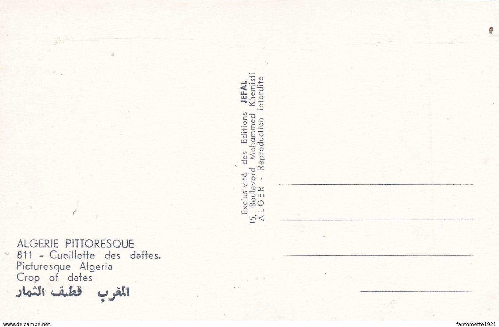 ALGERIE  CUEILLETTE DES DATTES (dil353) - Professions