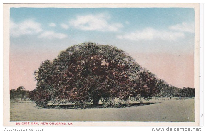 Louisiana New Orleans The Suicide Oak