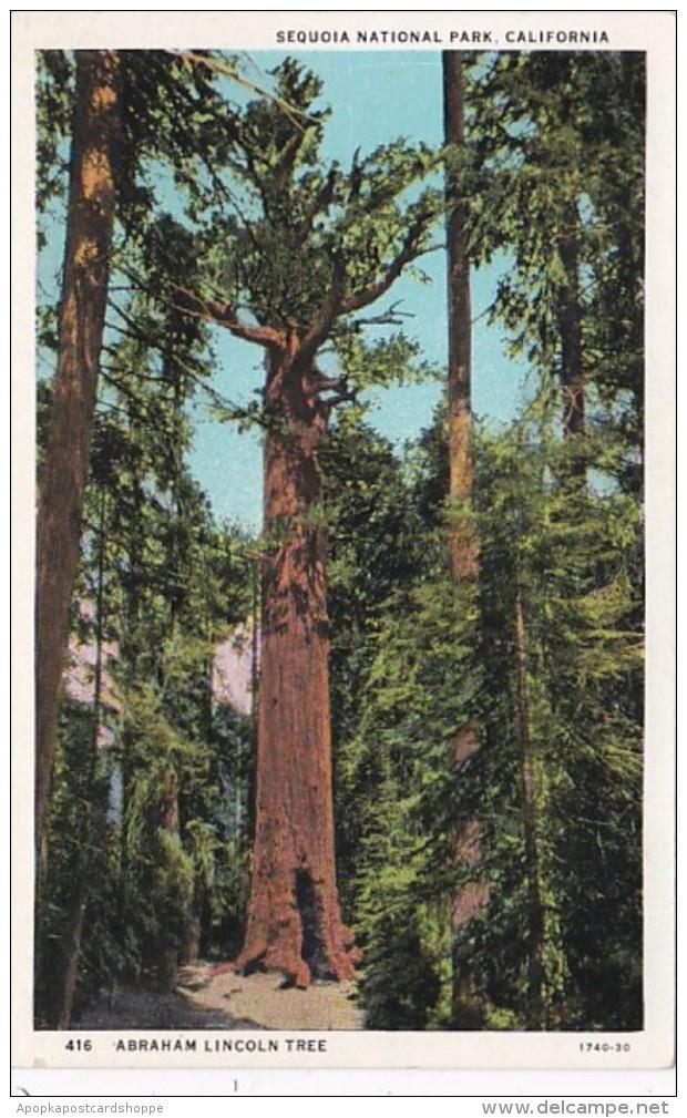 California Sequoia National Park Abraham Lincoln Tree