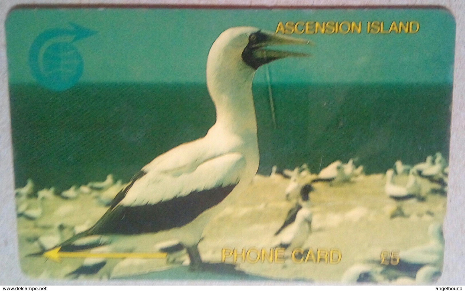 5CASA Booby Bird 5 Pounds - Ascension (Insel)